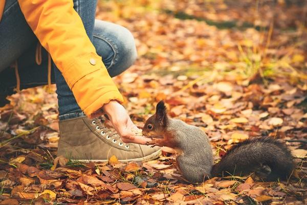 英語 リス squirrel